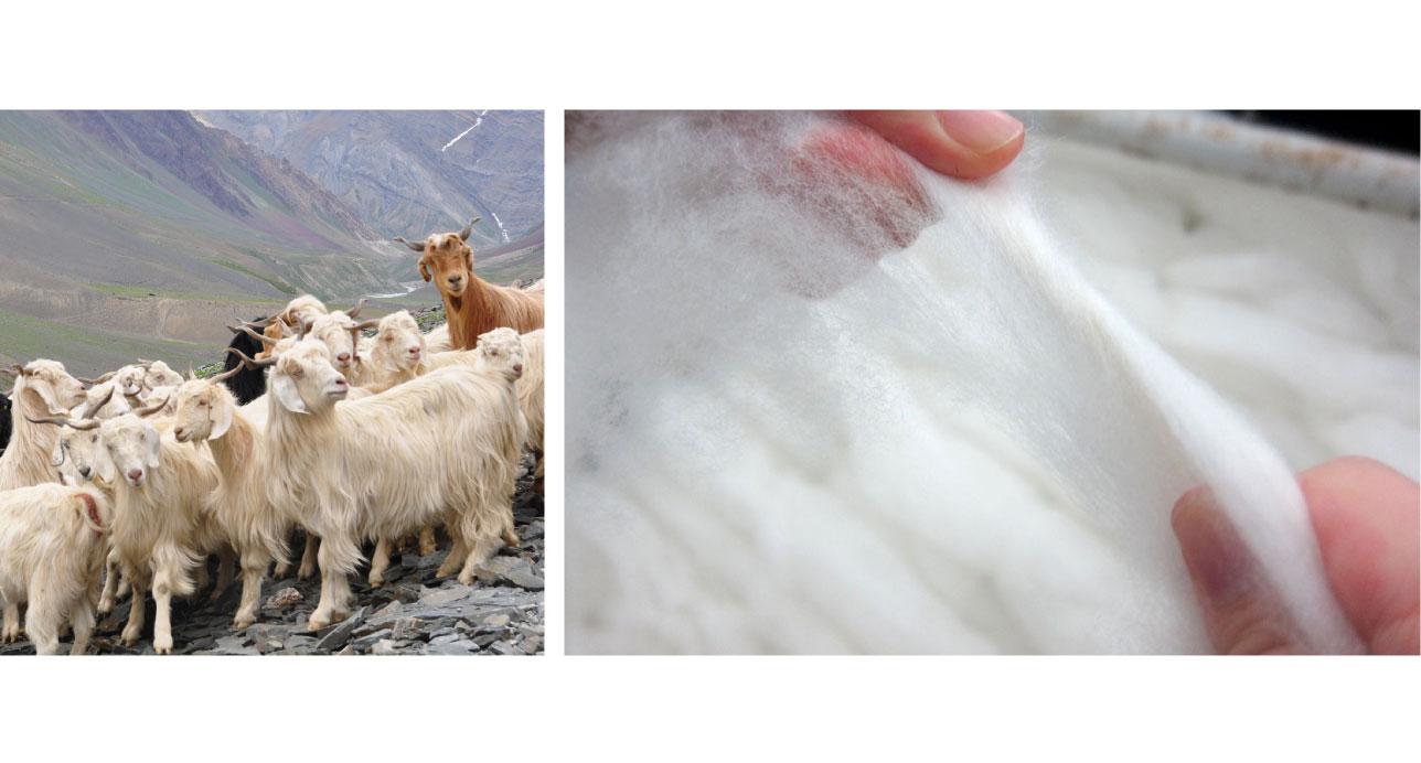 Mongolian Cashmere Goats