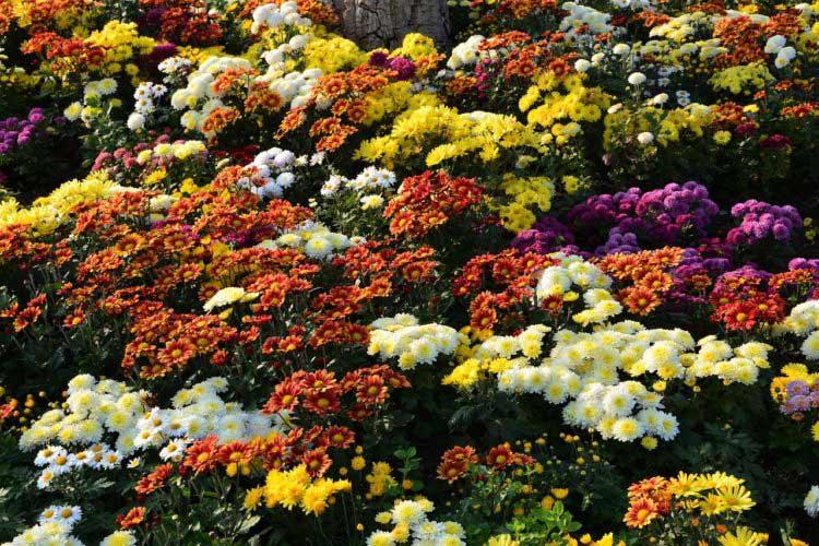 SS18 Florals dark florals